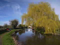 Weeping (Worthing Wanderer) Tags: canal spring derwent derbyshire sunny april derby trentandmerseycanal shardlow derwentvalleyheritageway