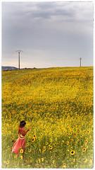 La contemplation (Enrico Cusinatti) Tags: travel vacation sky cloud france nature clouds canon eos nuvole nuvola natura cielo nostalgic provence fiori minimalismo fiore francia viaggi girasole vacanze provenza girasoli 6d nubi retr sovraesposizione canoneos6d vallensole enricocusinatti
