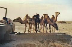 Pozo - Sahara Occidental (Luis Bermejo Espin) Tags: luisbermejoespn travel africa arabes arabia magreb desiertos desierto desiertosdelmundo sahara saharauis arena dunas camellos dromedarios musulmanes muslins beduinos tuareg tuaregs caravanas oasis nmadas