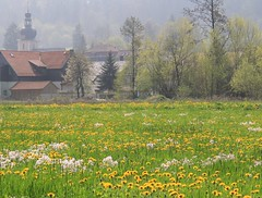 (:Linda:) Tags: church germany landscape village meadow kirche thuringia dandelion löwenzahn harras yellowwildflower