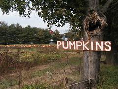 Autumn Pumpkin Patch in Bucks County, PA