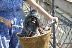 Chum Chum in a basket