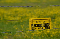 Don't fence me in (deanrr) Tags: flowers field yellow electric rural fence farm barbedwire electricfence morgancountyalabama