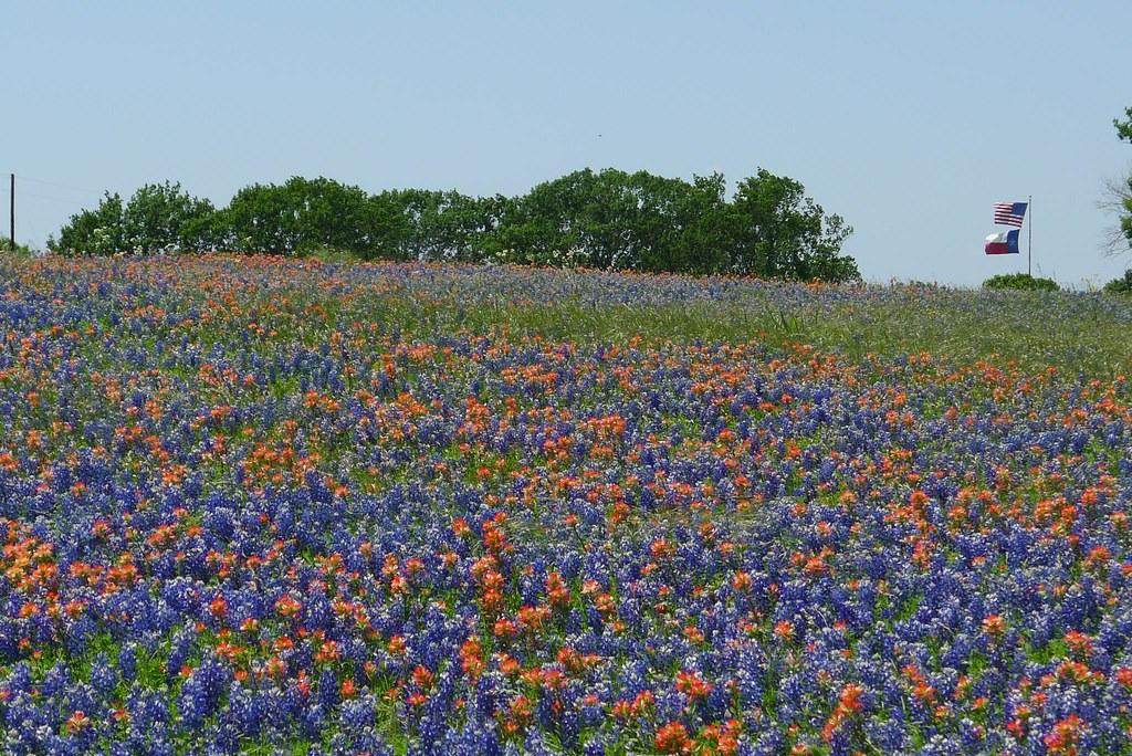 Bluebonnet Trails Ennis Texas