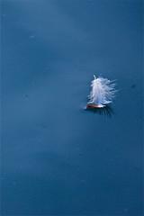 L'insoutenable légèreté de l'être (K M V) Tags: blue water feather floating unbearablelightnessofbeing höyhen somethingblueinmylife linsoutenablelégèretédelêtre olemisensietämätönkeveys