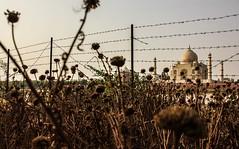 behind bars.. (siddy90) Tags: india love wow wonder indian tajmahal agra shahjahan akhbar
