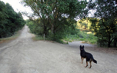 X roads (eks4003) Tags: dog oakland hike eat mocha redwoodpark eastbayregionalparks