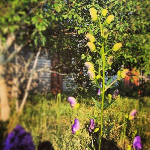 #belarus #summer #flower #garden #hollyday