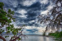 tropic (nosha) Tags: ocean blue trees sea sky usa seascape green beautiful beauty rock clouds island hawaii oahu shore northshore tropical aloha
