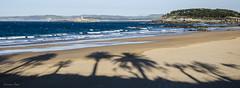 Palmeras en la playa (Laura Cu) Tags: espaa mar playa palmeras santander cantabria sardinero islademouro lauracue palaicomagdalena
