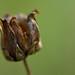 Dried Fall Flower Ubuntu 13.10