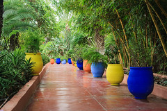 Pots in Majorelle Garden (andrewknots) Tags: africa gardens architecture landscape flickr northafrica places morocco marrakech publication publicgarden darkblue deepblue dominantcolor majorell geocity camera:make=canon exif:make=canon exif:focal_length=50mm cvkcv30 yvessaintlaurentgarden exif:iso_speed=1000 camera:model=canoneos5d geostate geocountrys exif:lens=ef50mmf14usm exif:model=canoneos5d exif:aperture=50 majorellgarden andrewskeywords lrmanaged