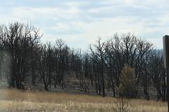 4639 Canon City Fire (wantadog) Tags: colorado fires royalgorge canoncitycolorado coloradolandscapes coloradofires