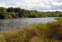 Looking across Tatton Mere (zawtowers) Tags: park trees lake green water grass countryside looking cheshire national trust across bushes mere tatton knutsford