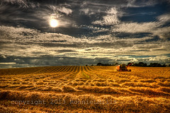 Harvest Time HDR (RonnieLMills. 800,000 views!! Thank you all :)) Tags: road county ireland nikon time sunday harvest down explore combine slider northern tamron hdr harvester newtownards 1024 hss d90 comber ballyhenry magicunicornverybest