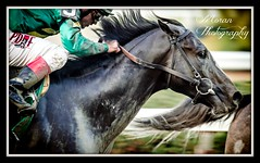 Honor Code (EASY GOER) Tags: nyc horses horse ny fall sports racetrack canon track state action tracks racing course event 7d athletes races sporting thoroughbred equine thoroughbreds belmontpark equines sportofkings fallmeet