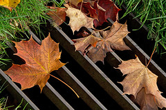 Fall Grate (Ninja Mom) Tags: autumn fall autumnleaves bayfield sewergrate on canon60d fallfotofest
