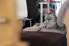 Forro_06 Gangster Cat! (Felix the Bear) Tags: cat  forro