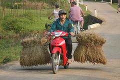 131027_015 (123_456) Tags: mai chau vietname koningaap mauchau