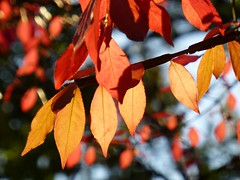 Happy Halloween (KaDeWeGirl) Tags: newyorkcity autumn orange sunlight leaves bronx foliage parkway pelham