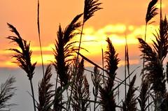 5 Minutes until sunset (Darren-) Tags: november sunset newyork color nature beautiful cat landscape evening longisland fireisland tails splendid nikond5100