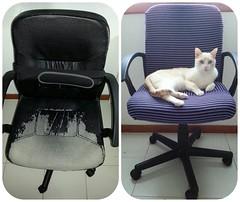 Como nueva :) ( Nevenka ) Tags: cats gatos lucas silla hechoamano renovar fotografiados tapizar flickrandroidapp:filter=none fagonoeu