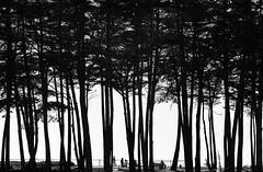 Seascape Silhouette (bior) Tags: leica blackandwhite bw santacruz seascape film monochrome iso400 montereybay rangefinder 35mmfilm fujifilm neopan 135 m3 neopan400 riodelmar 75mm filmphotography leicam3 35mmrangefinder fujineopan seascapecalifornia seascapeca