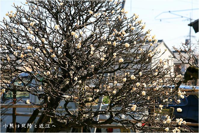 長濱市-40