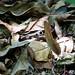 """O Dragão de São Francisco - São Francisco do Sul/SC - 21/01/2014 • <a style=""""font-size:0.8em;"""" href=""""http://www.flickr.com/photos/39546249@N07/12076268654/"""" target=""""_blank"""">View on Flickr</a>"""