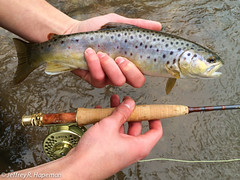 photo 3.jpg (jhapeman) Tags: pennsylvania flyfishing trout lancastercounty browntrout orvis salmotrutta