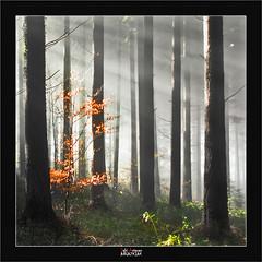 Light (Jabi Artaraz) Tags: light verde blanco luz contraluz landscape sony negro paisaje amarillo bosque zb monte dorado haya argia abetos euskoflickr superaplus aplusphoto jartaraz alfa350