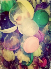 S.O.S. (Pamichen) Tags: animals play bubbles buy twoonie