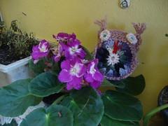DSC05135 (Artesanato com amor by Lu Guimaraes) Tags: artesanato fuxico trico crochê {vision}:{plant}=0767 {vision}:{flower}=0736 byluguimarães {vision}:{outdoor}=0575