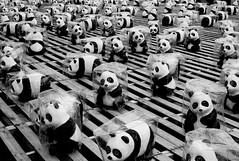 Pandas in the rain (h329) Tags: leica bw rain 35mm panda cityhall summicron m8 taipei f2 台北市 雨 貓熊
