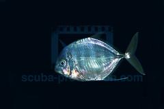 2011 09 BARATHIEU Réunion 1399