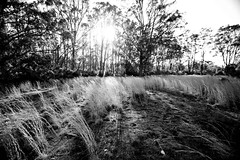 Rusted Sunset (Typemutha) Tags: new trip trees sunset bw favorite sun white black art nature beautiful wales rural john print ma photography bay photo search bush artist open artistic dusk top farm unique south side country review champion picture property award style australia best professional most commercial excellent land fields species outback prize portfolio favourite popular byron setting plain leading premium winning resume voted expert highest outstanding viewed the rated prizewinning reviewed prestigious darqhorse