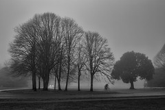woke up (zip po) Tags: street trees blackandwhite dublin fog mono cyclist silhouettes dew april stannespark utata:project=tw415