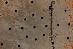 Imaginerium (gripspix (OFF)) Tags: shadow plant iron pflanze plate holes dried schatten eisen lcher vertrocknet 20140505 scrapheapbeauties