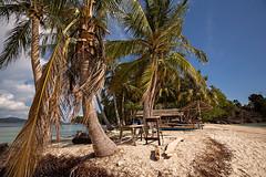 Beach paradise in Indonesia. (cookiesound) Tags: travel india beach canon sumatra island sand paradise palmtree whitesand paradiseisland phtography tropicalparadise westsumatra cubadak cookiesound nisamaier ullimaier