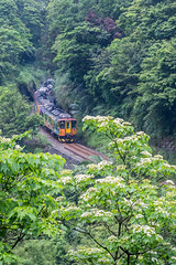 Short Spring  (Sharleen Chao) Tags: white flower color green vertical train canon river spring day riverside taiwan valley taipei    70200mm       verniciafordii tungoiltree   floralbeauty 106 tungblossom     canoneos5dmarkiii canon5dmarkiii