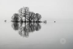 Lomond Fog (RusseII Lees) Tags: uk tree bird birds fog bay scotland russell calm loch lomond lees notbw drymen balmaha rowardennan millarochy milarrochy tamron2875sp