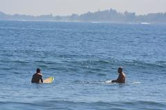 DSC_0031 (aliciadesign) Tags: surf whales bigisland honolii