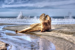 Beached... (scrapping61) Tags: ocean california beach driftwood mccluresbeach tistheseason ptreyesnationalseashore 2015 scrapping61 trolledproud