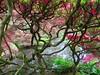 Japanese garden (JoséDay) Tags: japan nikon denhaag thehague p500 nikoncoolpix japansetuin freeshot lightcolor totalphoto beautifulcapture angelaward flickraward artoflight coolpixp500 simplysuperb devinecaptures nederlandstaligvriendenforum clingendaaldenhaag harmonyonflickr