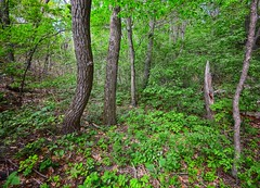 Forest next to the Beach (mswan777) Tags: trees green nature landscape leaf woods nikon hiking michigan scenic sigma trail 1020mm d5100