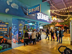 Sea Life Aquarium (Nicholas Eckhart) Tags: usa retail mi america mall aquarium us interior auburn sealife hills massive stores outlets greatlakescrossing outletmall 2016