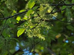 Baumblte (bratispixl) Tags: nature germany jahreszeit oberbayern mai frhling baumblte chiemgau traunreut blattfarben stadtrundweg bratispixl