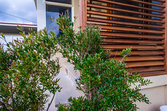 Eye Design Landsdcapes-16 (Broken Tree) Tags: landscapes landscaping manly sydney fencing palmbeach avalon monavale deewhy brookvale northernbeaches landscapedesign curlcurl whalebeach balgowlah outdoorkitchens outdoorrooms poollandscapes mansheds