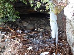 DSCN3712 (shelly_tichy) Tags: frosty february ohiopyle