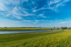 low tide (randaniel) Tags: flowers blauw cows blumen bluesky nrw dijk blauerhimmel bloemen khe deich altrhein kleve schenkenschanz blauwehemel canoneos70d randaniel